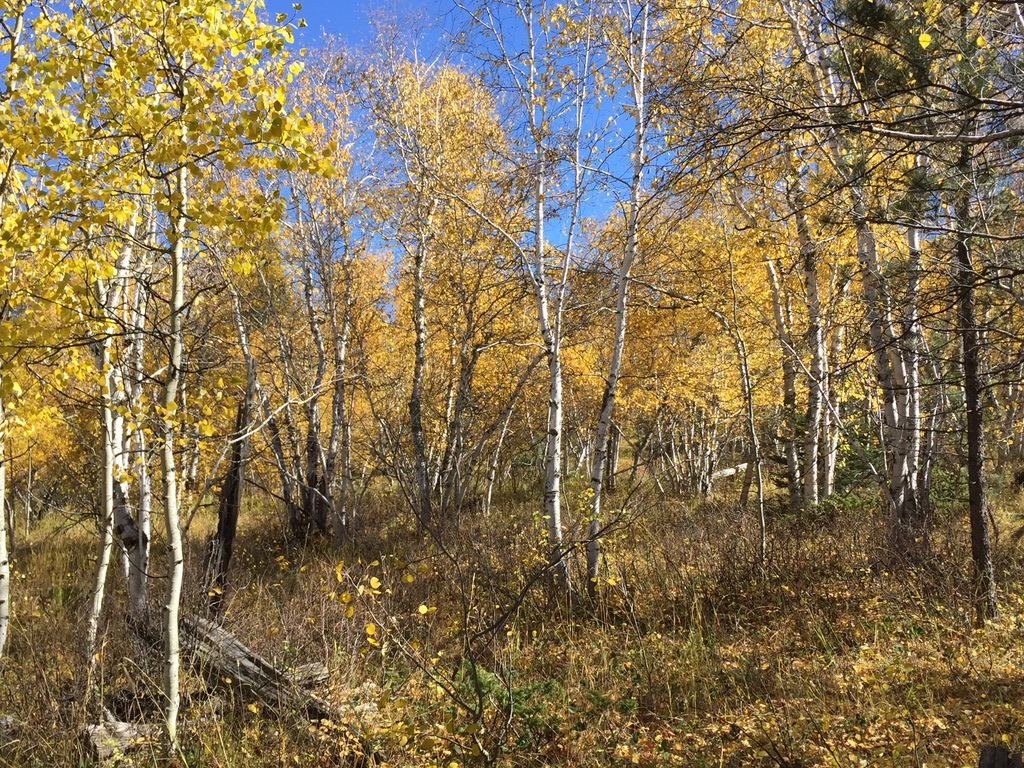 Old Baldy: a Great Place for Fall Colors in the Black Hills