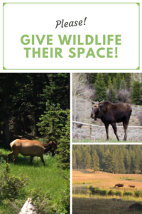In this post I discuss the necessity of respecting wildlife when we're out enjoying nature, and giving wild critters their space!