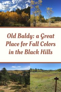 Looking for a great place to view fall colors in the Black Hills, away from the crowds? Check out Old Baldy, on Tinton Road near Spearfish!