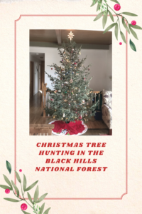 Are you wanting to channel your inner Paul Bunyan and cut your own Christmas Tree? Look no farther than your local, national forest!