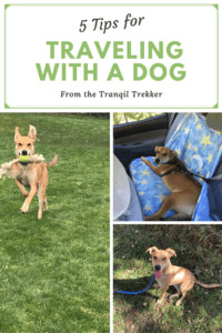 Want to travel with your dog without feeling like you need to rip your hair out? Read on for tips on how to do just that!